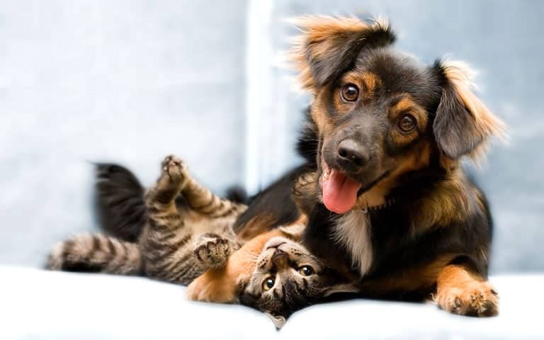 3 Tips to Make Sure Your Pets Are Always Welcome
