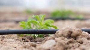 dripp irrigation with plant